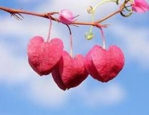 convide o amor